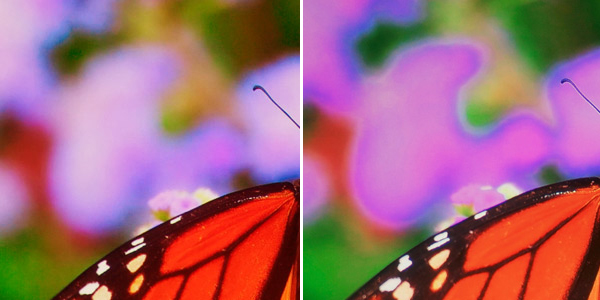 Butterfly Close-Up_10-bit vs 8-bit processing